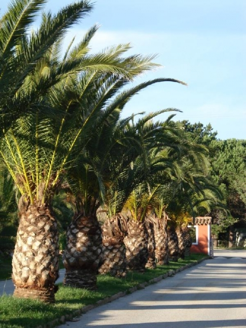 Camping Toison d'Or